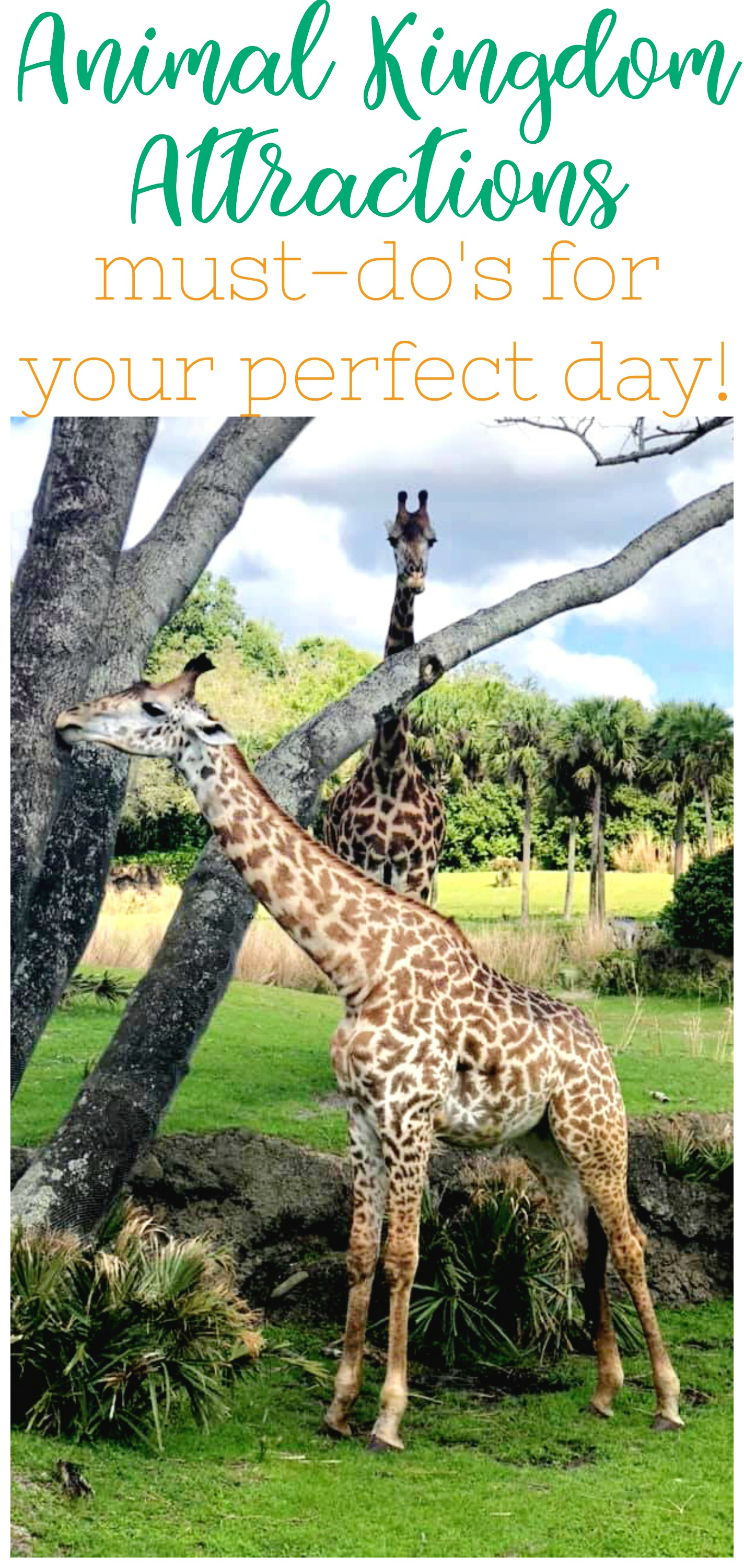 must-do Animal Kingdom Attractions, Animal Kingdom One Day, Animal Kingdom Guide, Best Animal Kingdom Attractions, #NowMoreThanEver #DisneySMC #VisitPandora #AnimalKingdom #DisneyTips #DisneyParks #DisneyWorld