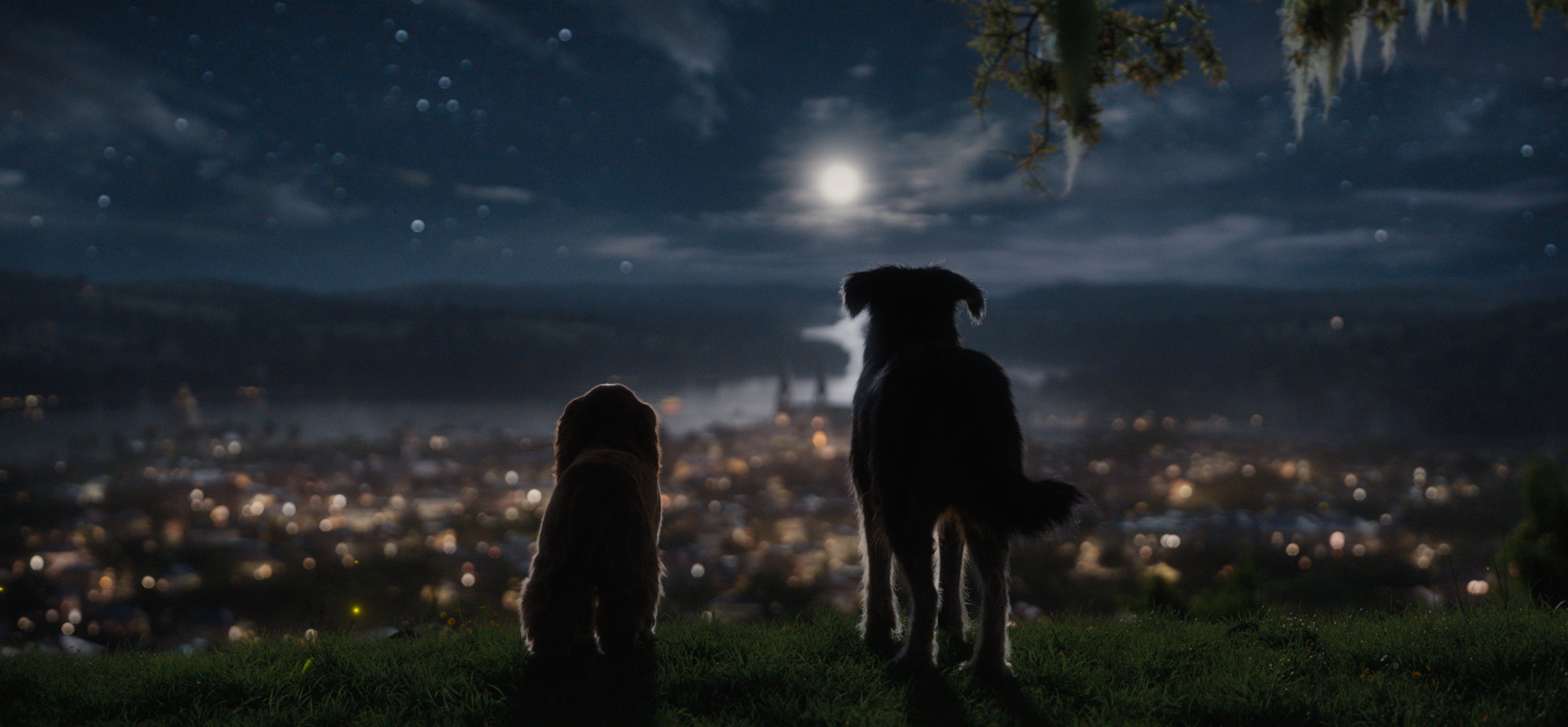 lady and the tramp overlooking city