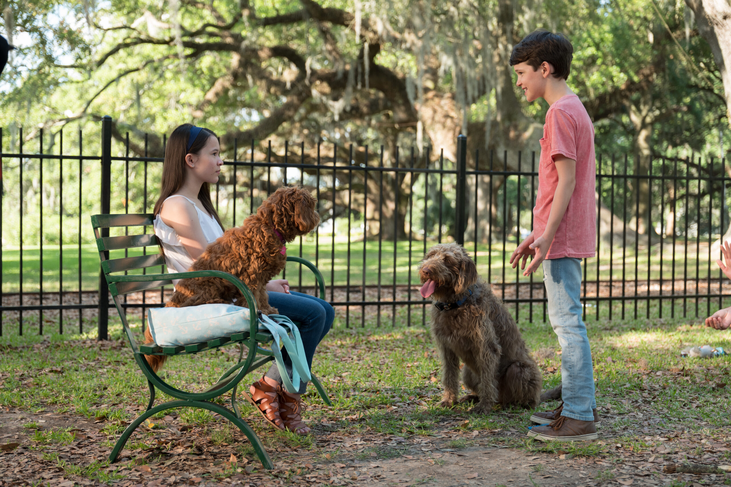 Oliver, Henry, and Sophie in Think Like a Dog