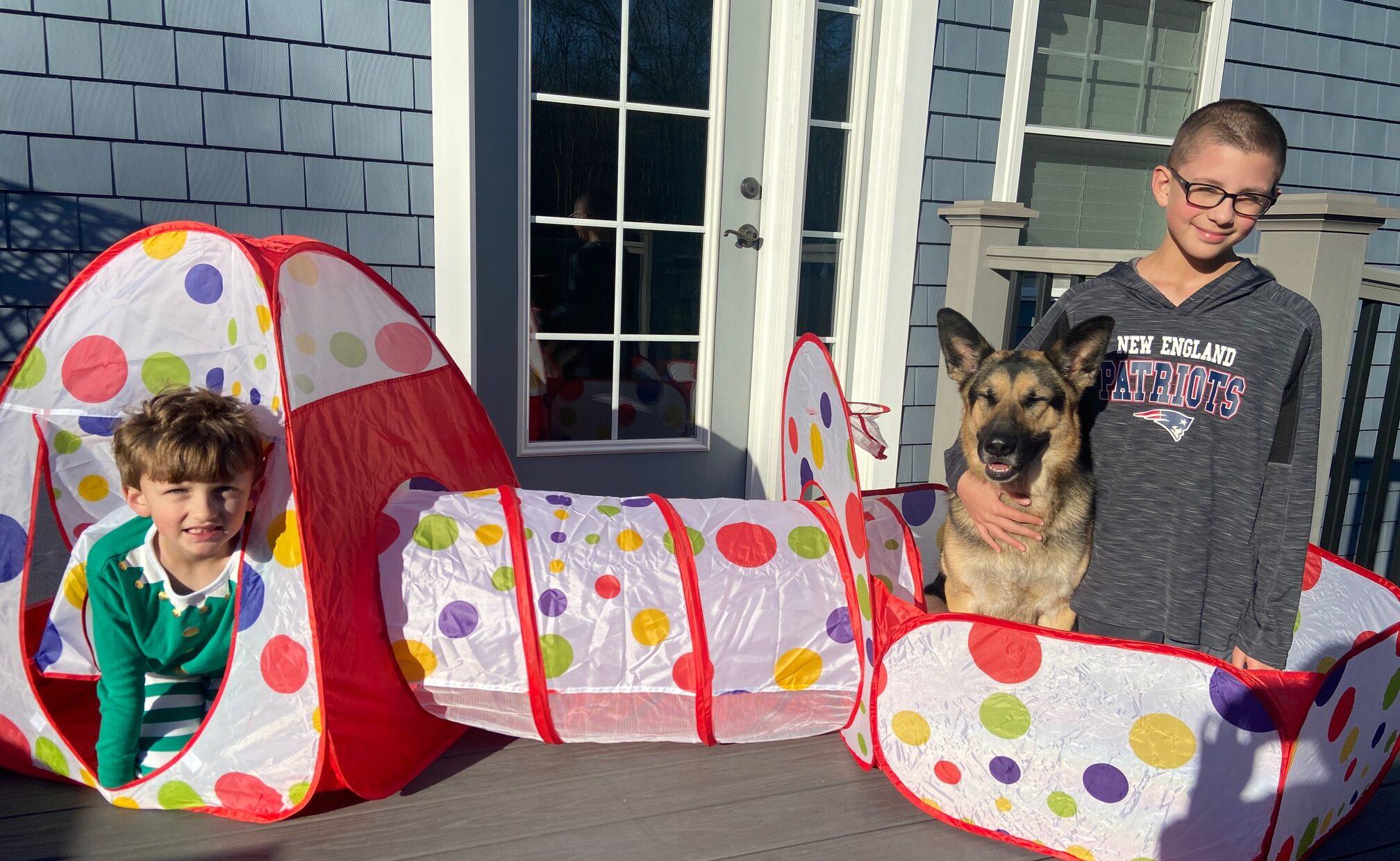 german shepherd and tent